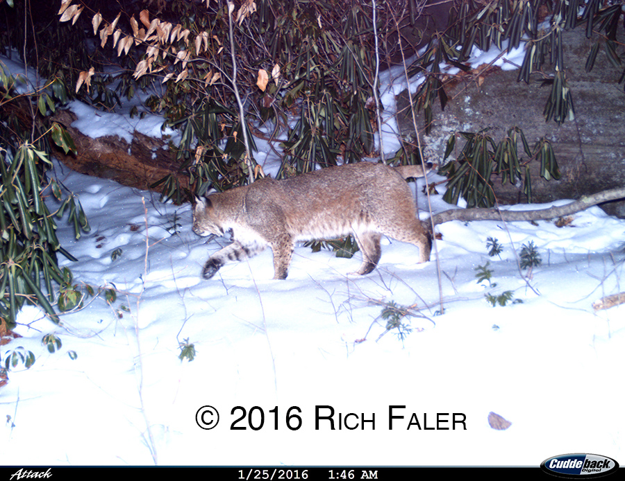 TrailCams2