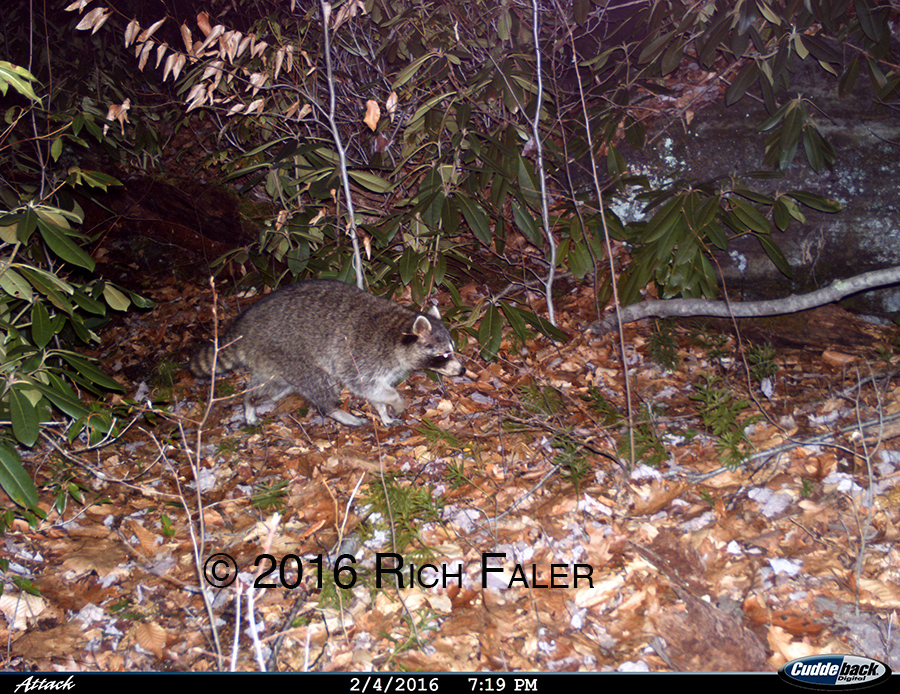 TrailCams3